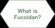 What is Fucoidan?