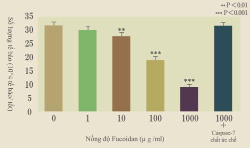 Tác động của Fucoidan trên PBL