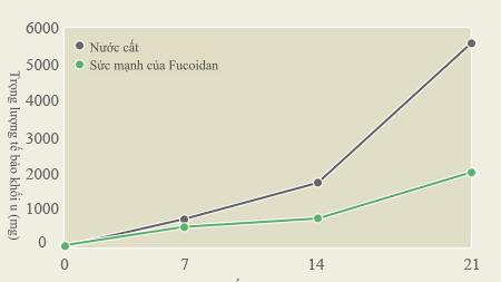 Tác động của Fucoidan trên Molt4
